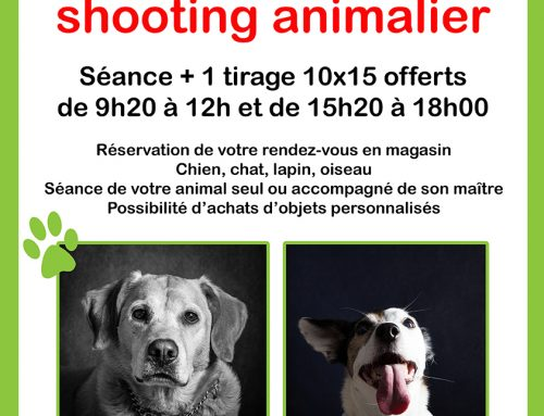 Shooting animalier