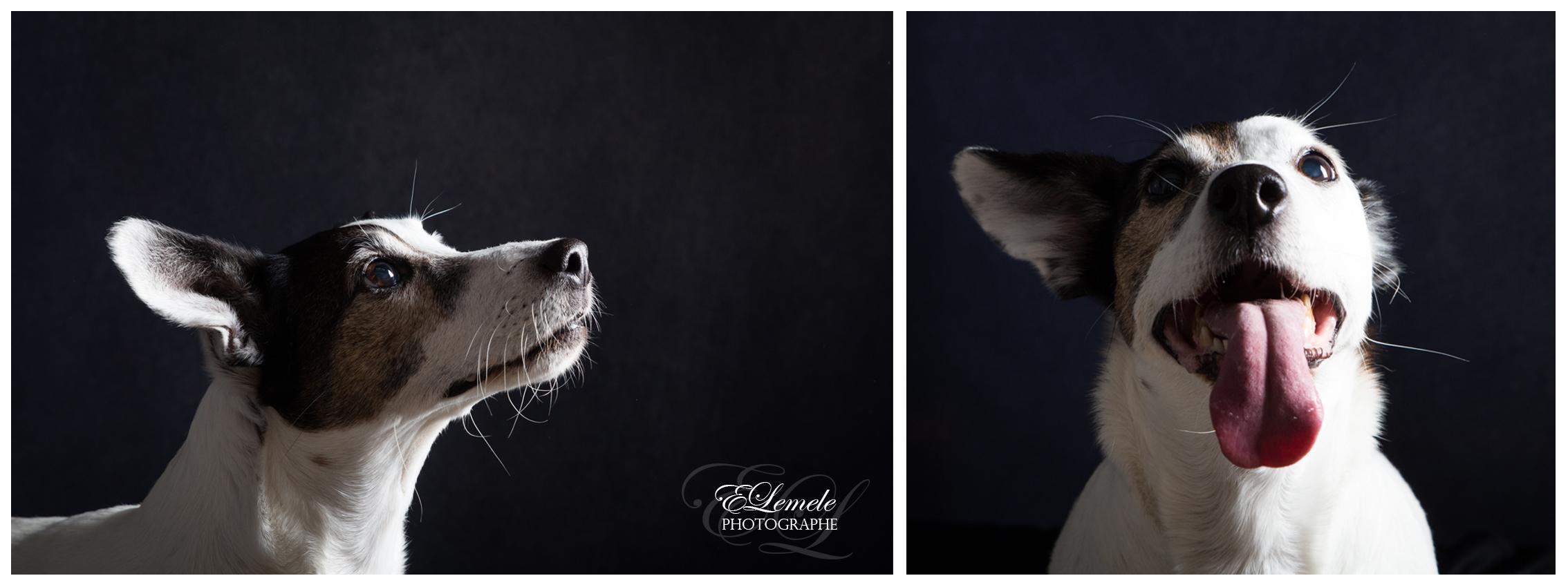 chien-animal-shooting-manosque