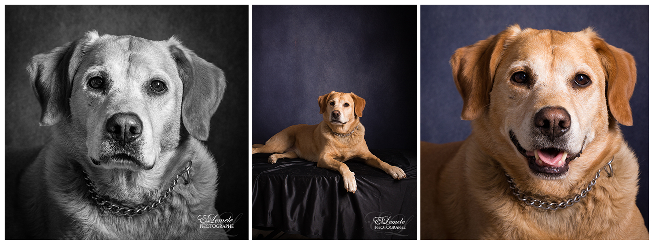 shooting-animaux-chien